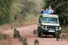 safari dans le parc Manyara