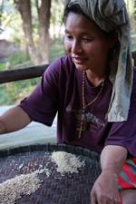Karen triant des grains de riz