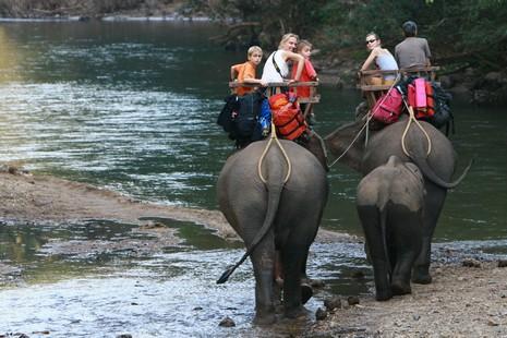 Balade familiale à dos d'éléphants