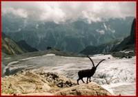 Glacier d'Orny