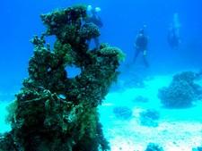 Abu Galawa - Patates de coraux