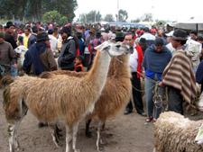Marché de Saquisili