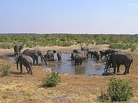 Eléphants - point d'eau d'Halali - Etosha