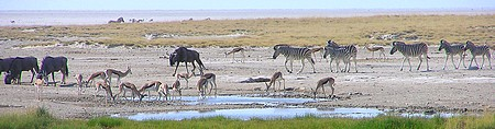 Point d'eau de Rietfontein - Etosha